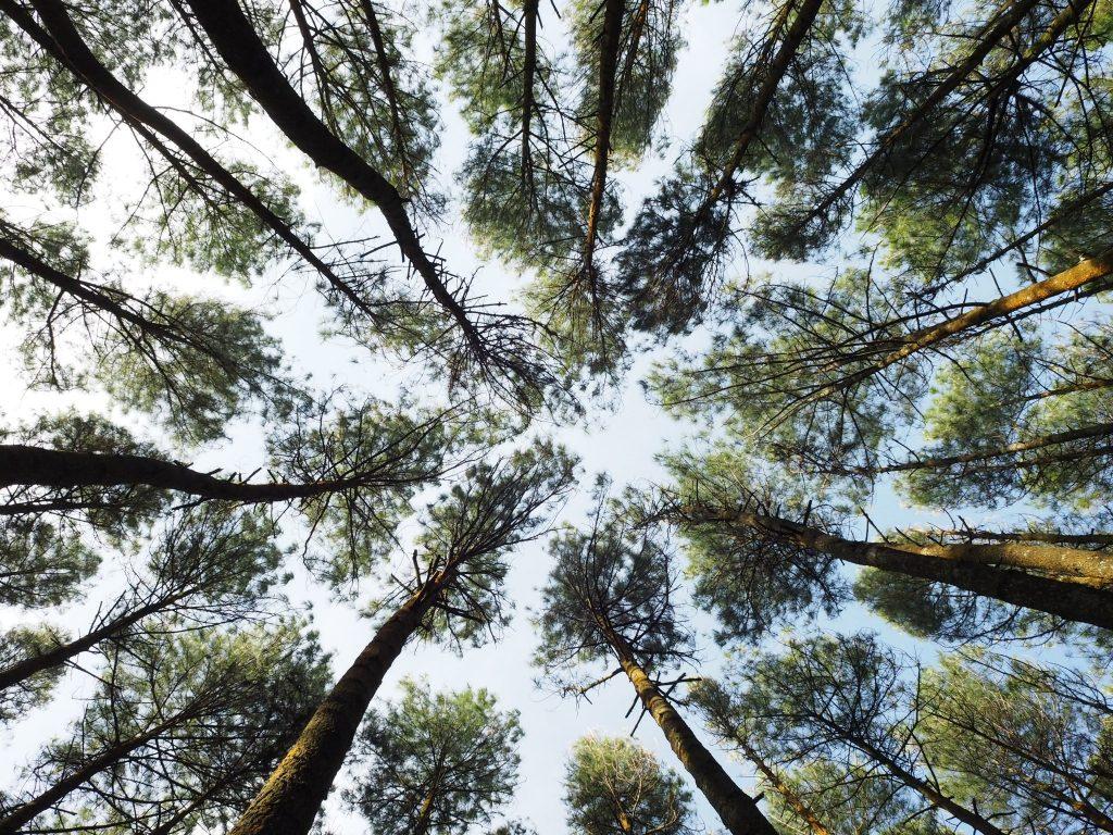 Abholzung des Regenwaldes für Papierproduktion