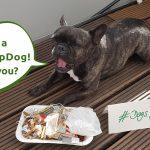 Dogs for Future - auch Tiere profitieren vom Müllsammeln