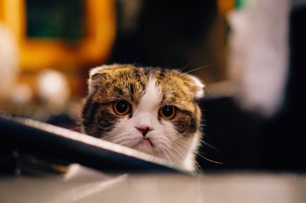 Katze an Silvester Angst