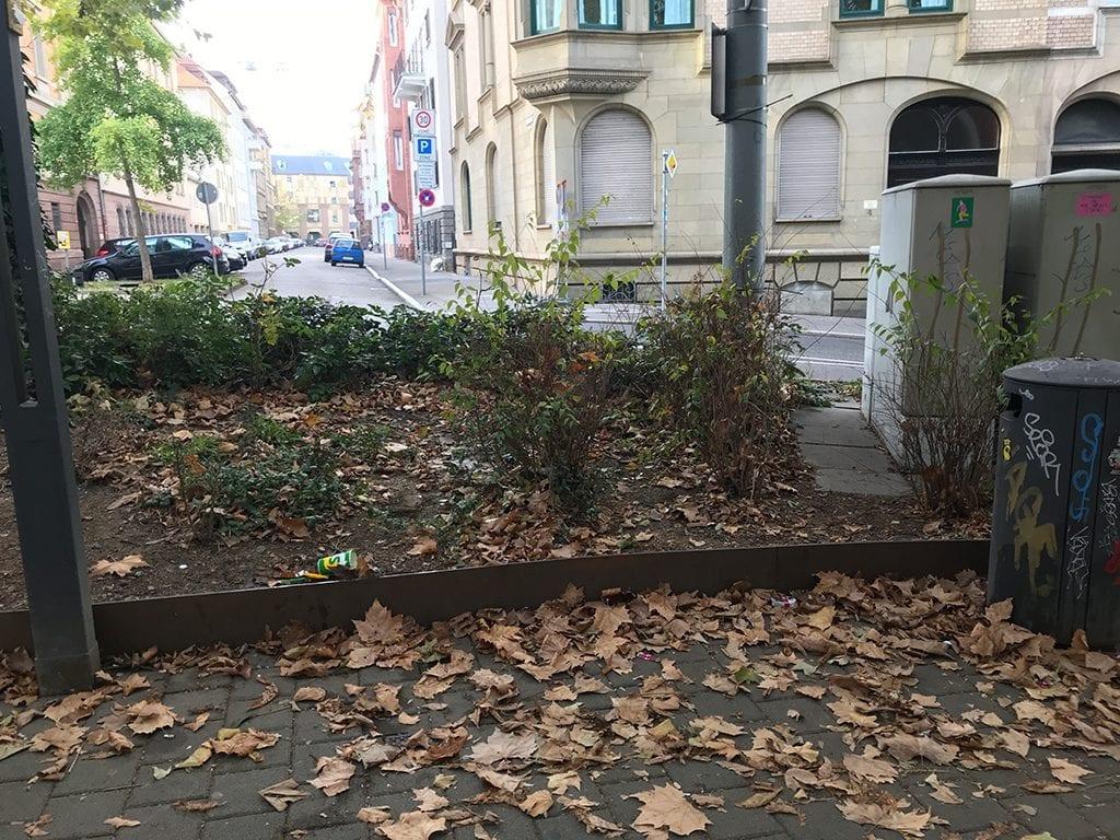 Wilder Müll per App der Stadt gemeldet